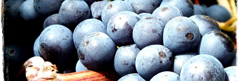 Experiencia vendimia en Rioja